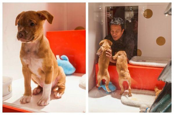 L'événement des fenêtres de vacances de Sfspca amène les animaux de compagnie adoptables à Macy's