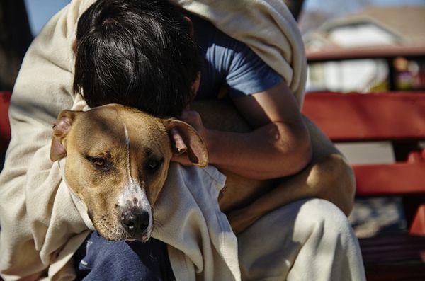 «Sleepbus» permet aux personnes sans abri et aux animaux de compagnie de dormir