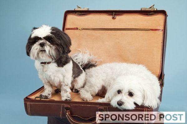 Voyage intelligent pour animaux de compagnie pendant les vacances avec petsmart
