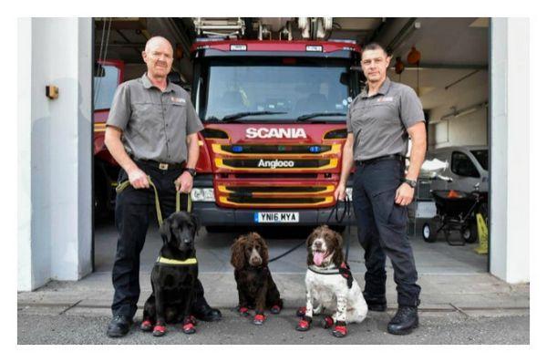 Les chiens renifleurs essentiels à la récupération dans la dévastation de la tour de grenouilles