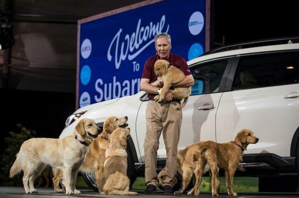 La montée subaru est la nouvelle voiture conçue pour les chiens