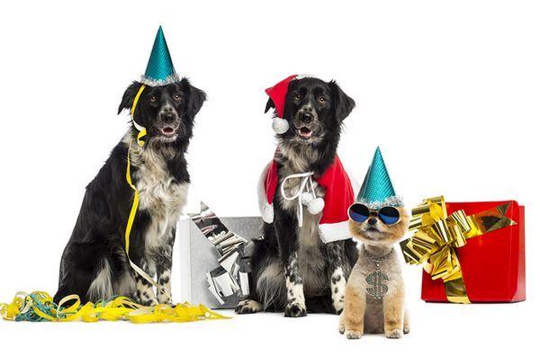 Selon un sondage, les animaux de compagnie sont une excellente excuse pour quitter une fête