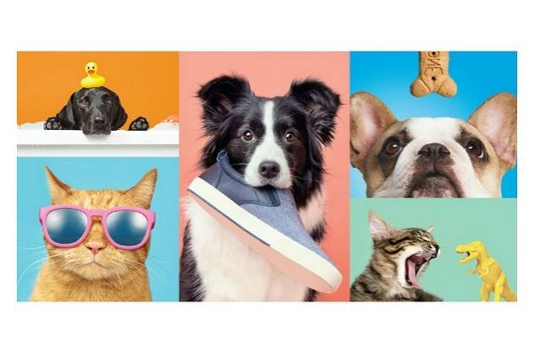 Cible les paires avec barkbox pour offrir des produits pour animaux de compagnie en magasin