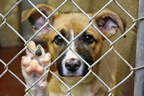 Enseignez à vos enfants la cruauté envers les animaux en vous rendant dans un refuge pour animaux