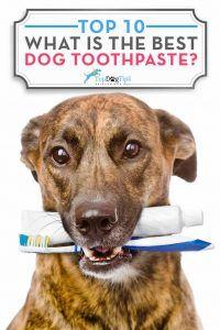 Quel est le meilleur dentifrice pour chien