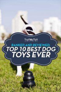 Top 10 - Quel est le meilleur jouet pour chien