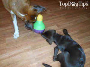 Le meilleur jouet pour chien