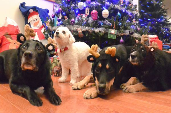 Le chien poilu des chiens »présent: des idées de cadeaux de Noël pour votre être humain