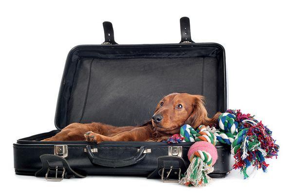 Le guide de vacances du jolly jet-setter pour monter à bord de votre chien
