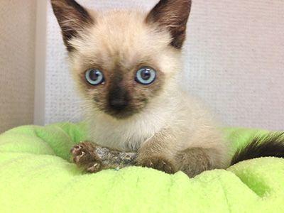 La vie de pye: un chaton déterminé comme elle est adorable