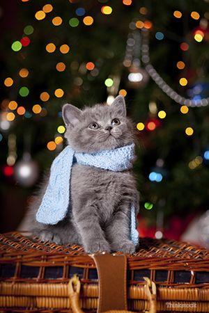 Le miracle de la cloche de Noël