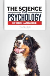 La science et la psychologie du langage canin: votre chien vous prend-il?