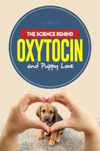 Toute la science derrière l`oxytocine et l`amour chiot