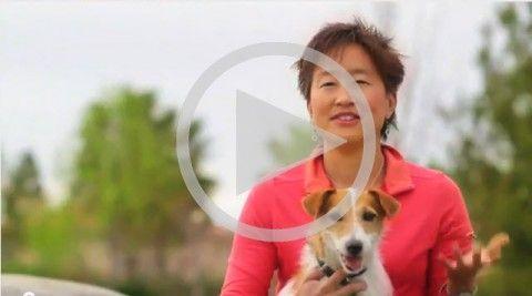 Le secret pour perfectionner la formation de chien