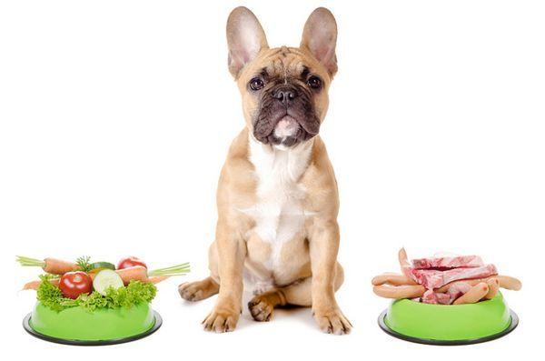 La vérité sur les régimes végétariens et les chiens