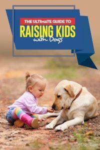 Votre guide ultime pour élever des enfants avec des chiens