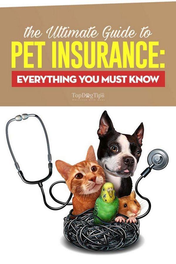 Le guide ultime de l`assurance pour animaux de compagnie: tout ce que vous devez savoir
