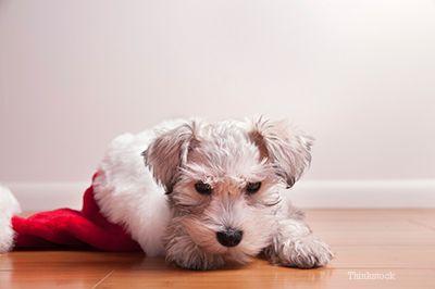 Réfléchissez bien avant de donner des animaux de compagnie en cadeau