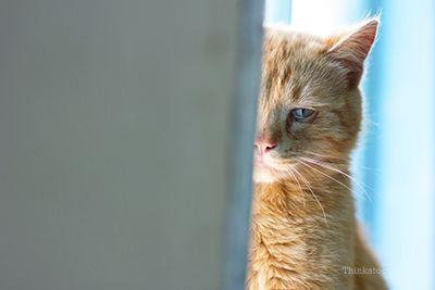 Conseils pour amener votre chat chez le vétérinaire