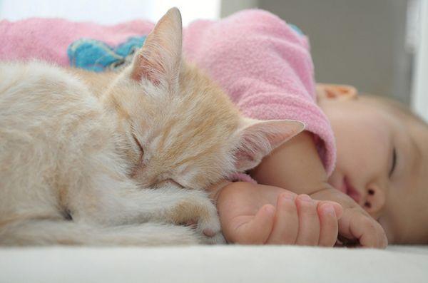 Conseils pour préparer votre chat pour un nouveau bébé