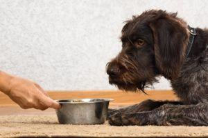 Top 10 des meilleurs aliments pour chiens de taille moyenne
