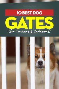 Les meilleures barrières pour chiens à l`intérieur et à l`extérieur