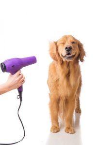 Séchage d`un chien avec un séchoir pour chien