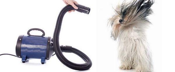 Un chien baigné est séché à l`aide d`un séchoir à cage