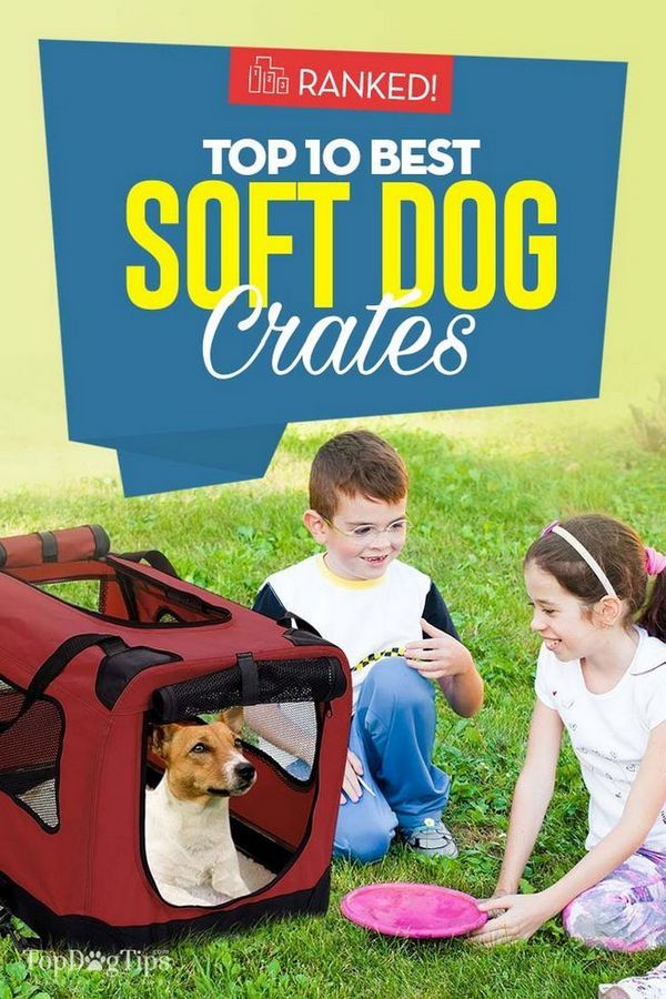 Top 10 des meilleures caisses pour chiens