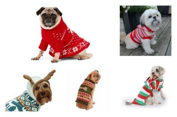 Top 10 des meilleurs pulls de Noël pour chiens