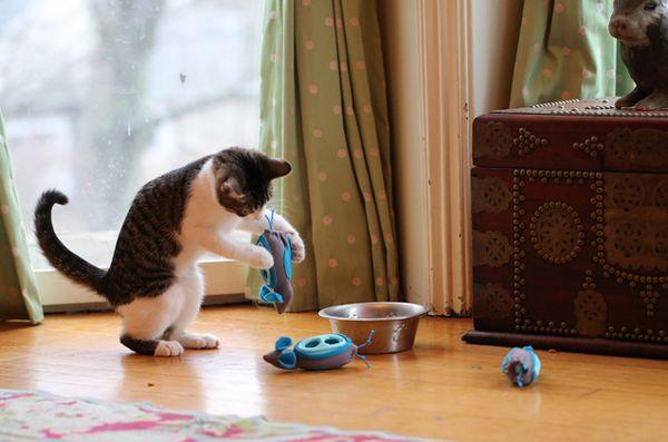 Meowy Catmas Cadeaux pour les chats et les fans de félins: NoBowl