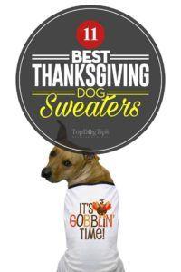 Top 11 des meilleurs pulls pour chiens d`action de grâces