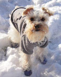 meilleures bottes de chien pour l`hiver