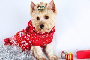 Meilleur pull de Noël pour chien