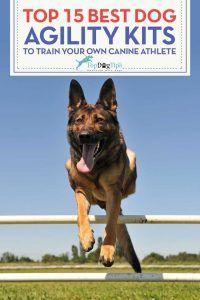 Top 15 meilleurs kits d`équipement d`agilité de chien