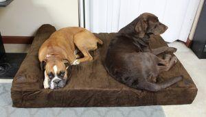 Top 15 meilleurs lits pour chiens de grande taille