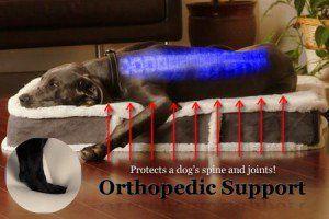 Choisir le meilleur lit de chien pour les gros chiens pour un soutien commun