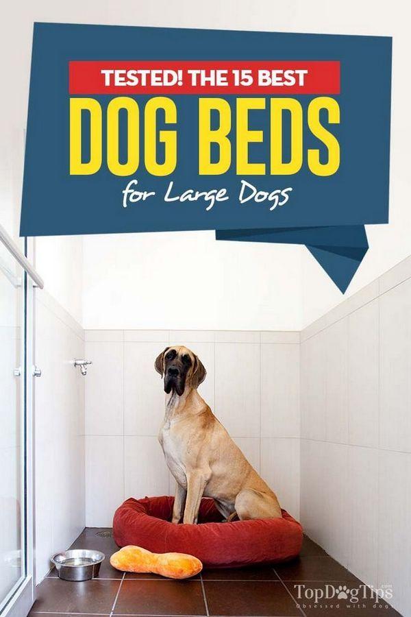 Top 15 meilleurs lits de chien pour grands chiens