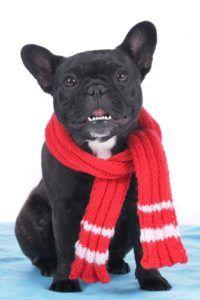meilleur chien écharpe de Noël