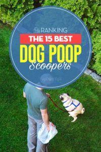 Les 15 meilleurs scoopers de caca de chien