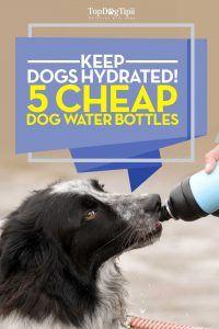 Top 15 meilleures bouteilles d`eau pour chien