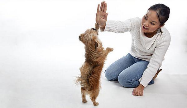 Les 15 meilleurs conseils de dressage de chiens que vos enfants vont adorer