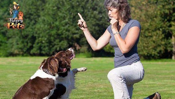 Top 27: différence entre le dressage de chiens et le comportement de comportement canin