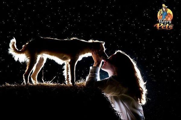Top 28: le pouvoir de guérison des chiens