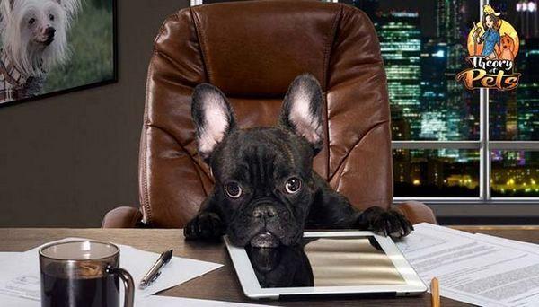 Comment commercialiser des produits pour chiens