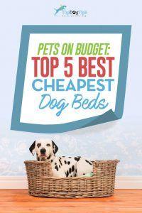 Top 5 des meilleurs lits pour chien moins de 20 $