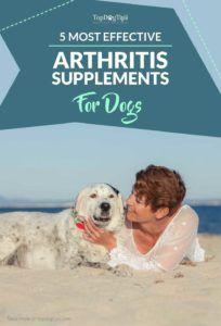 Top 5 des meilleurs suppléments d`arthrite pour chien