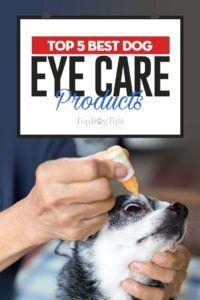 Top 5 des meilleurs produits de soins oculaires pour chiens