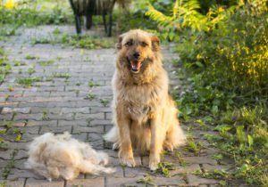 Top 5 des meilleurs produits d`épilation pour chiens