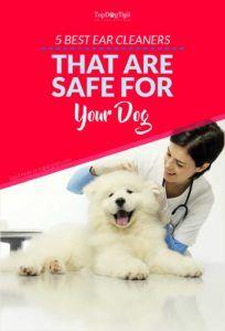Les meilleurs nettoyeurs d`oreille pour chiens